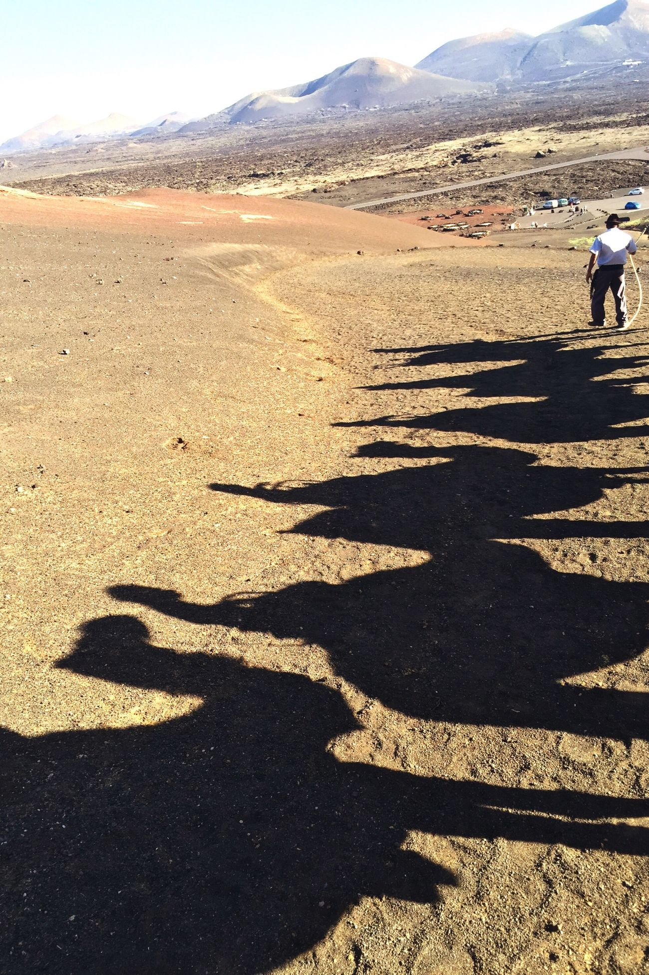 Camels Shadows Camel Riding Lanzarote Camel Shadow On The Move In The Desert Camel Adventure Camel Racing We Love Camels! Telling Stories Differently