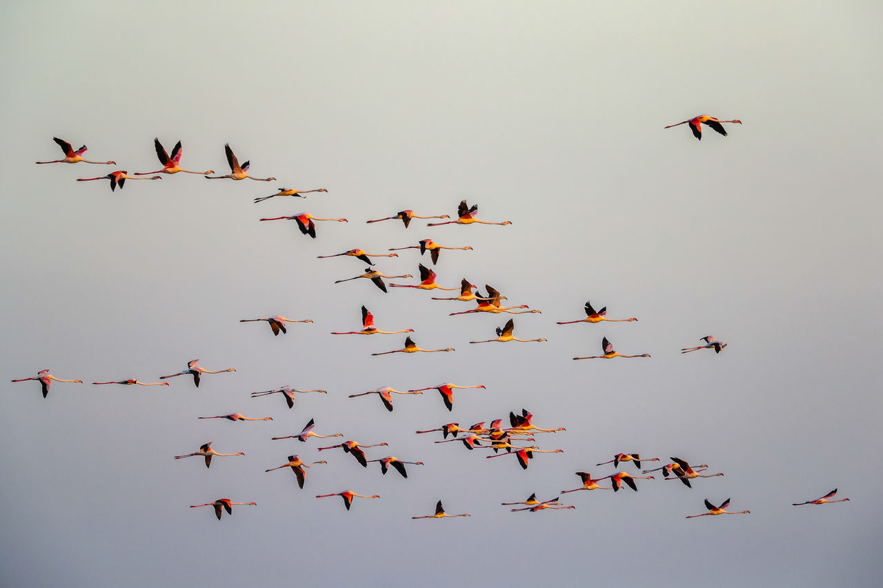 Beautiful stock photos of sky, flying, bird, animals in the wild, mid-air