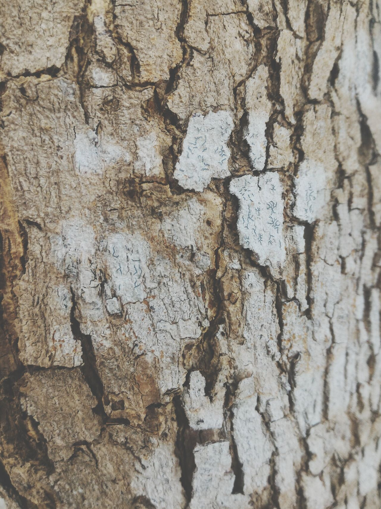 Full Frame Backgrounds Textured  No People Close-up Day Outdoors Nature Beauty In Nature EyeEmNewHere Wood Sukamara,indonesia Kalteng INDONESIA Indonesia_photography Sukamara