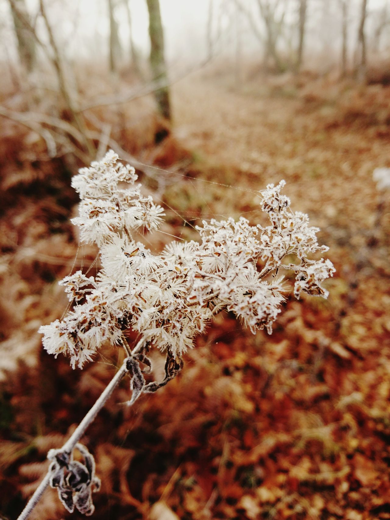 Winter Cold Temperature Beauty In Nature Close-up First Eyeem Photo