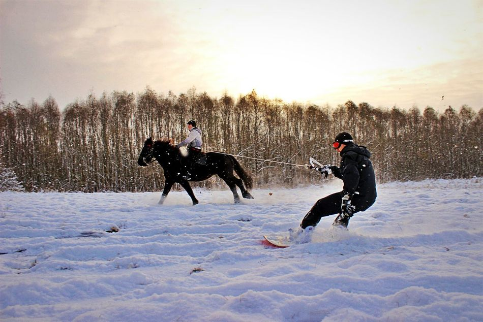 Velikiy Novgorod Horse Snowboarding ❤ Snow ❄ Snowboardinggggg Snowboarding Snow Nature Day People Beauty In Nature Horselove Horse Photography  Horse <3 Horse Life One Animal Snowy Days... Snowy Snowyday Sky Cloud - Sky