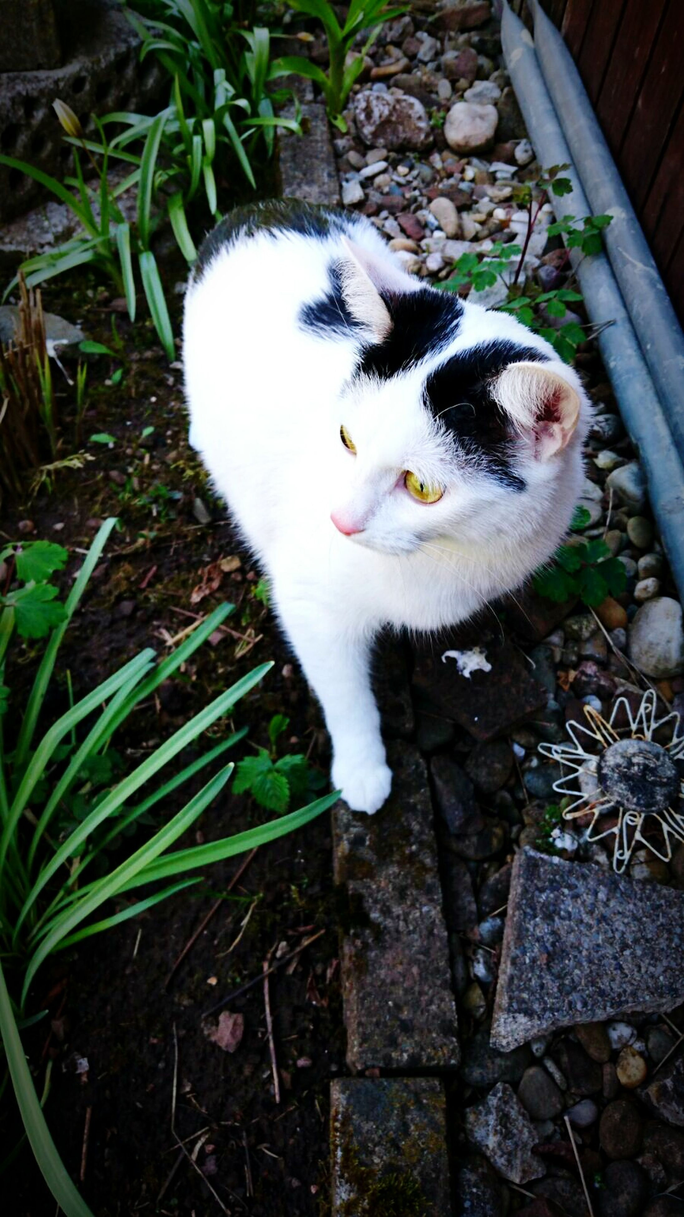 animal themes, domestic cat, one animal, cat, domestic animals, pets, high angle view, feline, mammal, white color, whisker, relaxation, zoology, no people, day, full length, cute, lying down, outdoors, young animal