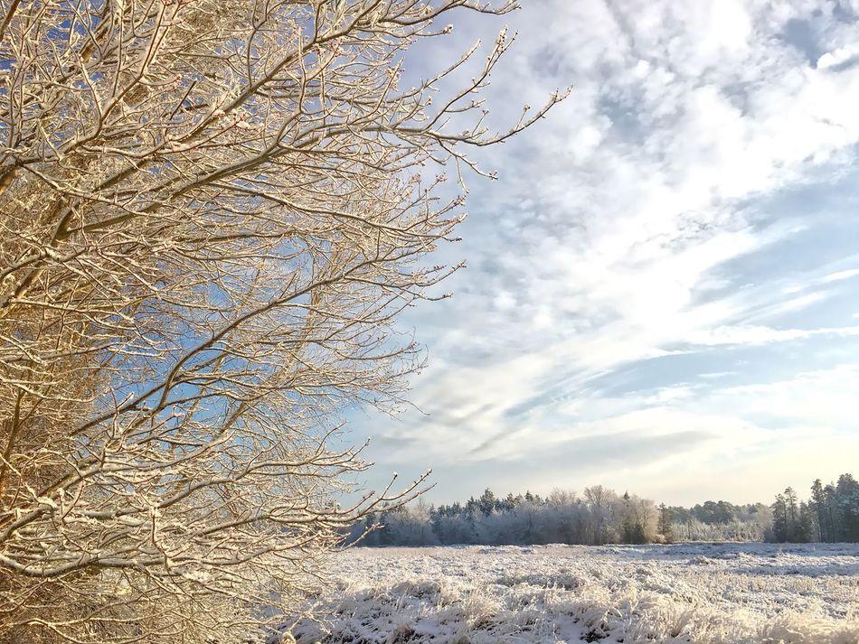 Spring, sprang, … EyeEm Best Shots Tadaa Community NJ Pinebarrens Snow ❄