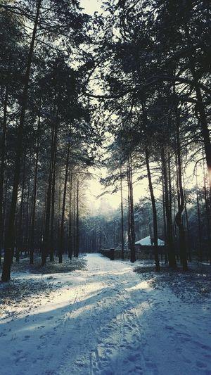 Cold Winter ❄⛄ Winterwonderland Goodday✌️ Goodson