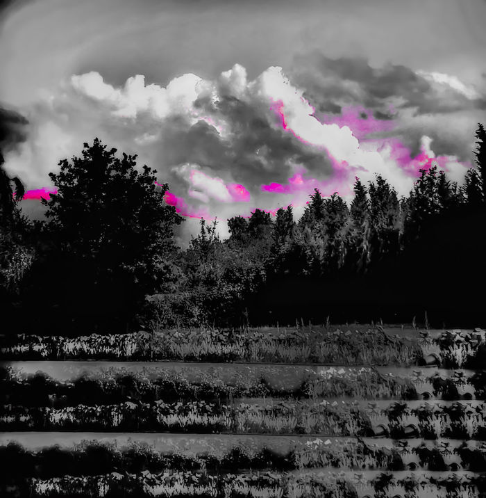 Cloud - Sky Nature Neon Lights Beauty In Nature Outdoors Blackandwhite No People Schadow Experimente Reflection Outdoor Photography Pink Color Shadoes And Light Sillouette Sunset Neon Color Landscape Clouds And Sky Cloud_collection  Pink And White Neon Life EyeEm Selects EyeEmNewHere Your Ticket To Europe The Week On EyeEm Perspectives On Nature Black And White Friday Crafted Beauty