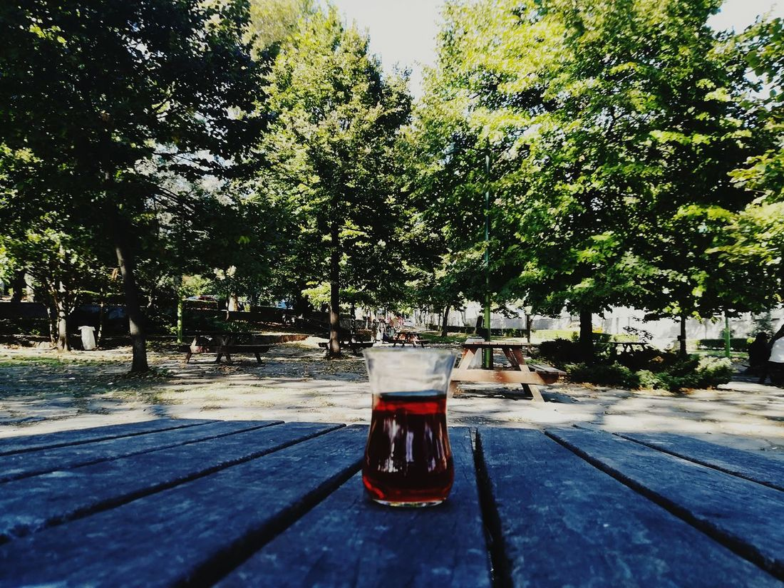 Tree Drink Refreshment Day Outdoors No People Food And Drink Table Growth Drinking Glass Shadow Water Nature Freshness Sky