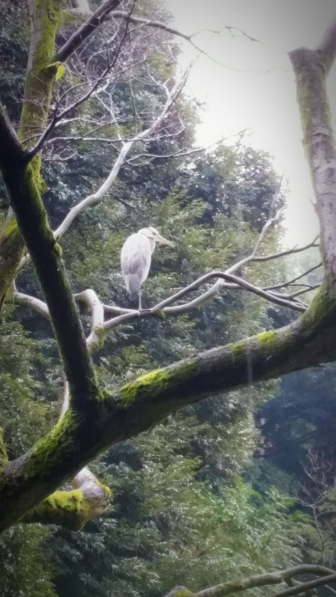 Heron ? Bird Wildlife Tree Koishikawa Korakuen Garden Tokyo Tokyo Nature Fall Autumn Tokyo 2015 Autumn 2015 Naturelover EyeEm Nature Lover Nature_collection Nature Photography Enjoying Nature Japan Travel Photography