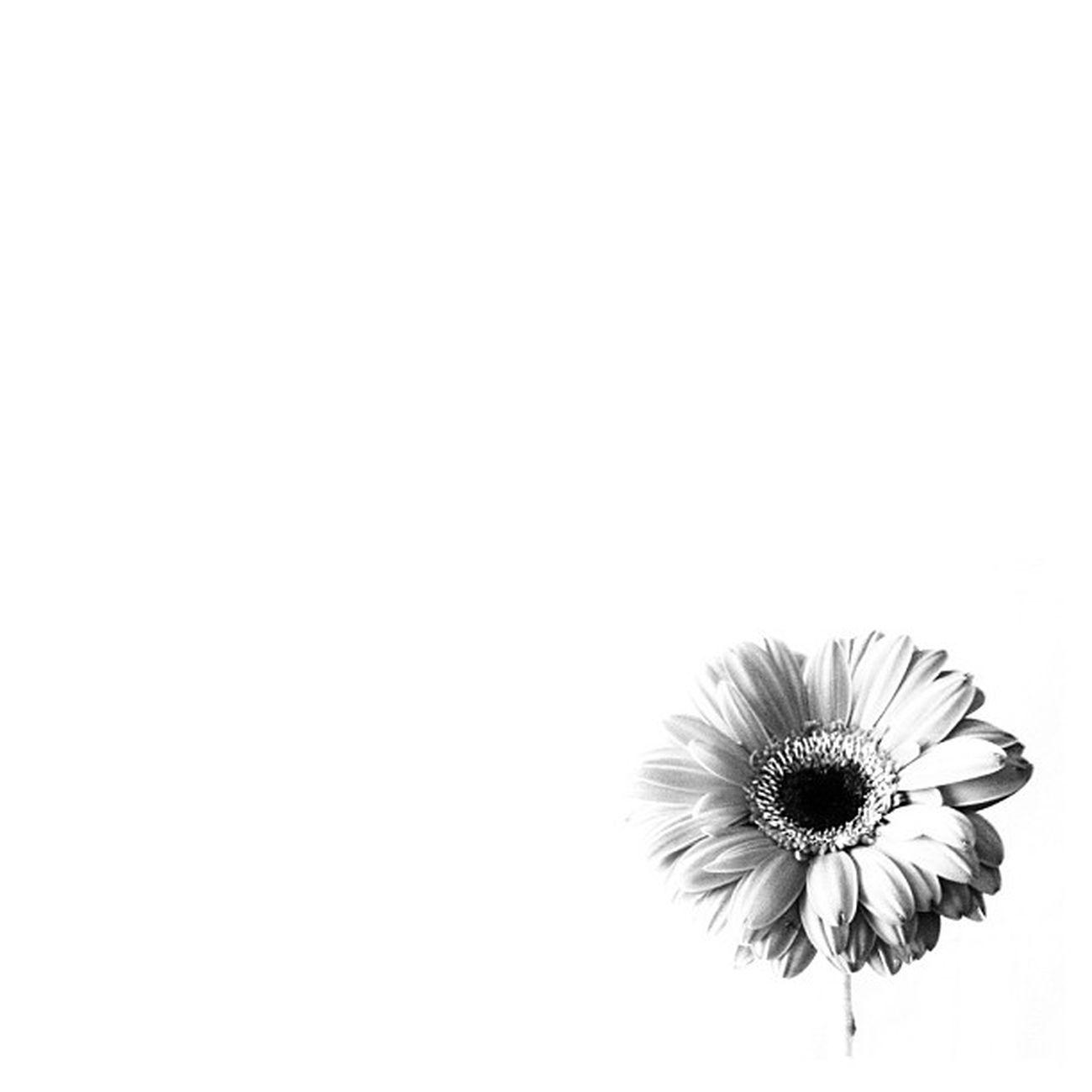 Had to do a black and white. #rsa_bw #bnw_life #royalsnappingartists #infamous_family #udog_bw #bw #bnw #bw_crew #bw_lover #bnw_worldwide #mdbw #bw_masters #ic_bw #irox_bw # monoart #monochrome #bwsquare Rsa_graphics Unsung_masters Monochrome Bnw_captures Bw Udog_bw Bnw Worldcaptures Bw_lover Mdbw Bwsquare Igminimal Irox_bw Rsa_bw Bw_crew Bw_masters Ic_bw Blackandwhite_nio Infamous_family Royalsnappingartists Bnw_worldwide Rsa_bnw Bnw_life Nothingisordinary
