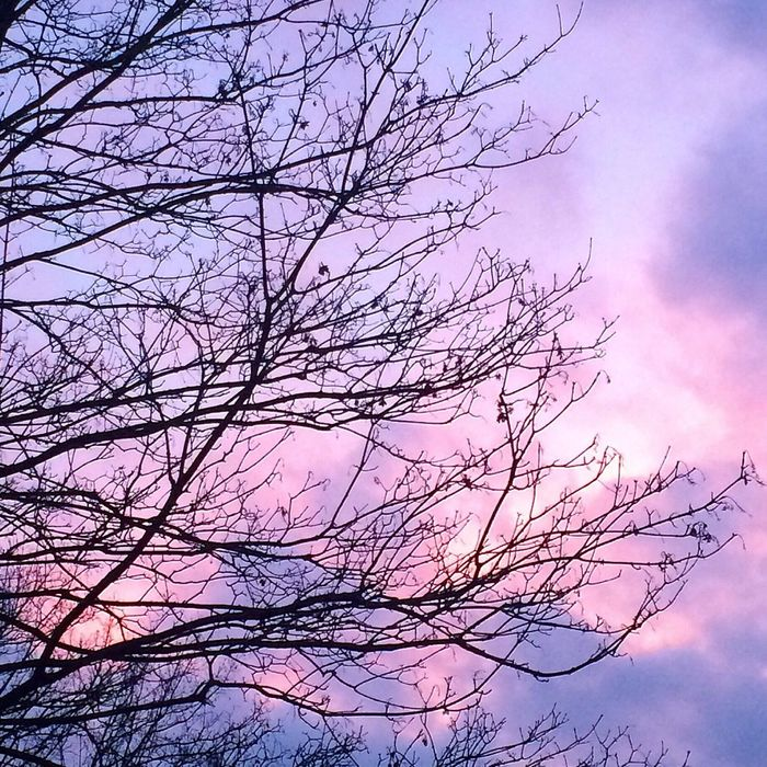 berlin sky Sky Sky And Clouds Skylovers Pink And Purple Pink Purple Branches Tree Trees And Sky Sunset Berlin Berliner Ansichten Berlin Mitte Sunset Silhouettes Sunset Mood Pink Sunset Pink Sky