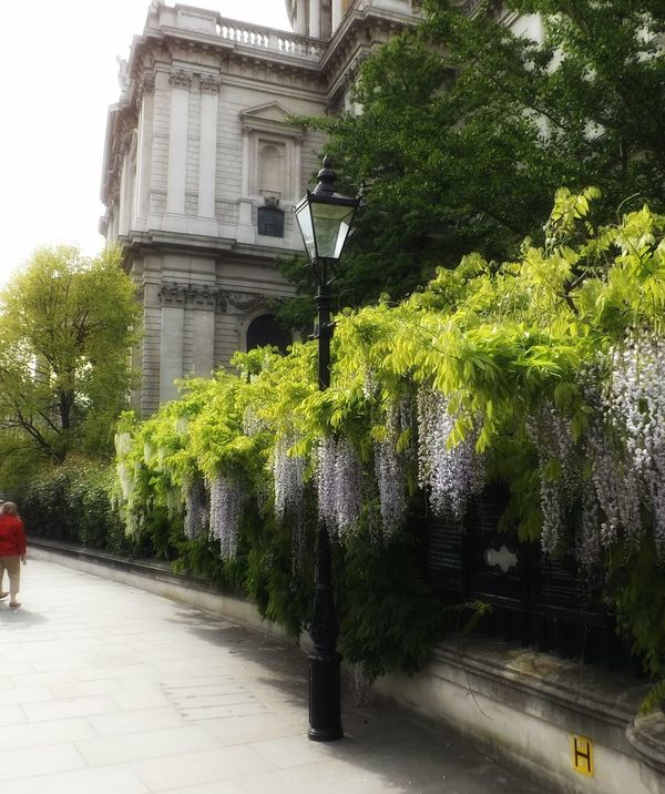St Pauls Cathedral London Flowers, Nature And Beauty Check This Out Taking Photos Nature