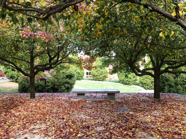 Manchurian Pear trees in autumn Absence Autumn Beauty In Nature Bench Branch Change Day Empty Fallen Falling Growth Leaf Leaves Nature Outdoors Park Park - Man Made Space Park Bench Scenics Season  Tranquil Scene Tranquility Tree Tree Trunk