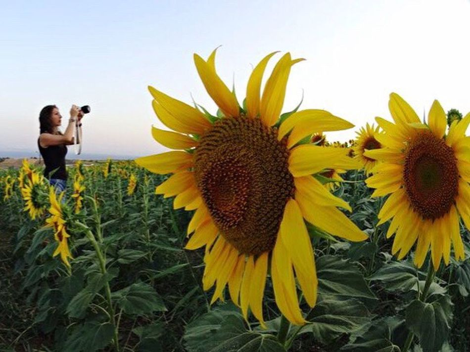 The OO Mission Springtime Spring 43 Golden Moments Adventure Travel Landscape Mountains Summer Summertime Sunflower Self Portrait Selfportrait