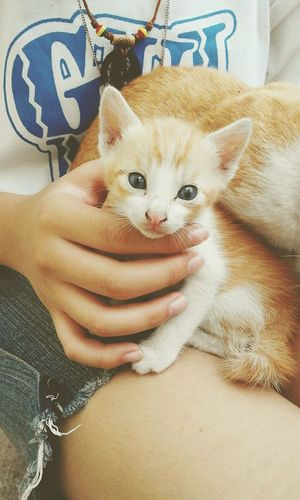 ..my baby Butter. :3 her eyes are like gateways to the catworld. <3 Pets Kitten Cats Cat Lovers I Love My Cats  Heartwarming Love
