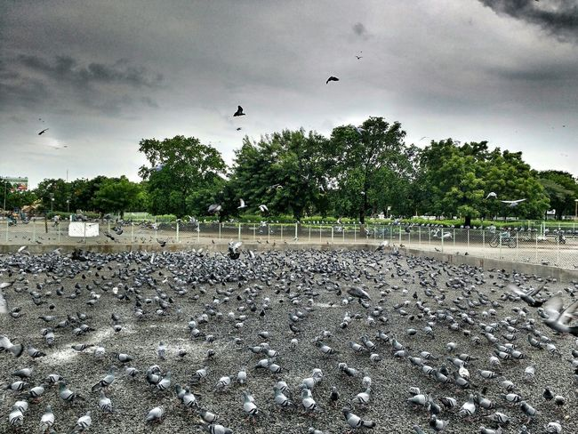 Birds Nature Lover Clouds Makingdrama Flying High