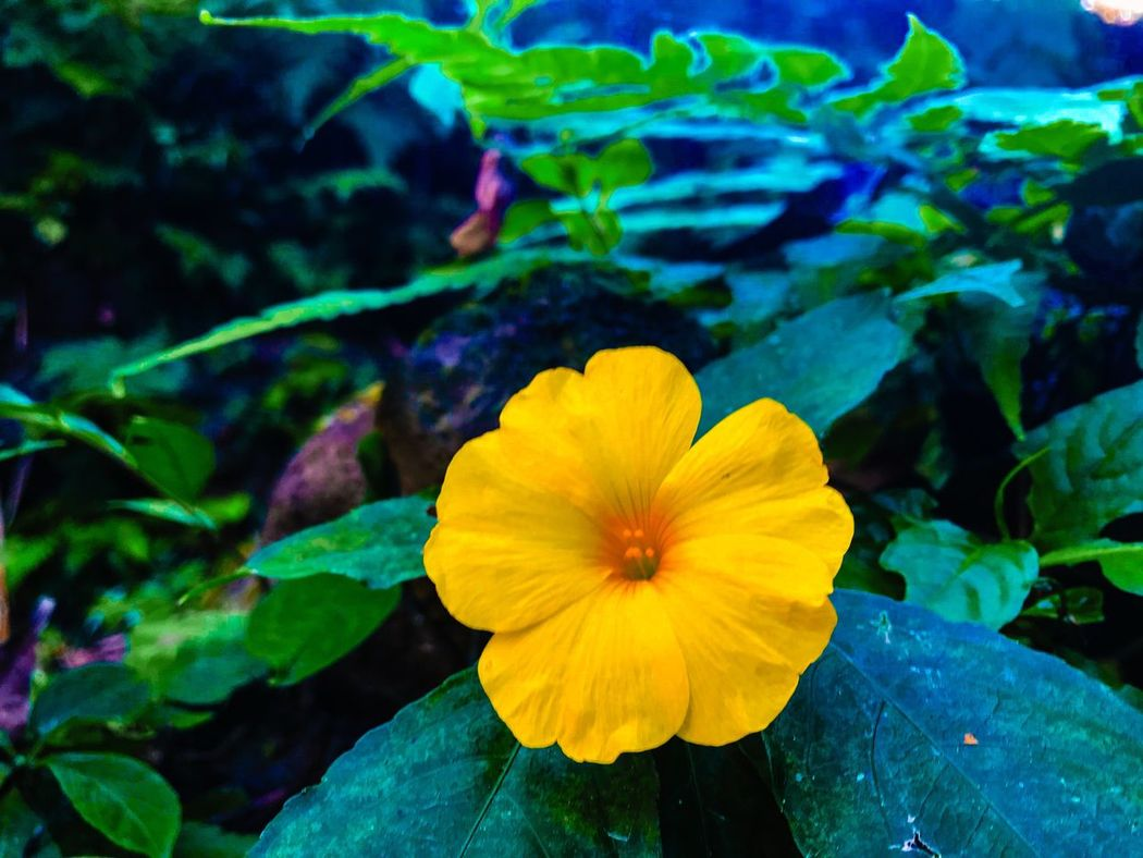 Flower Petal Fragility Growth Flower Head Plant Beauty In Nature Nature Freshness Yellow Outdoors Blooming Day Close-up Leaf No People