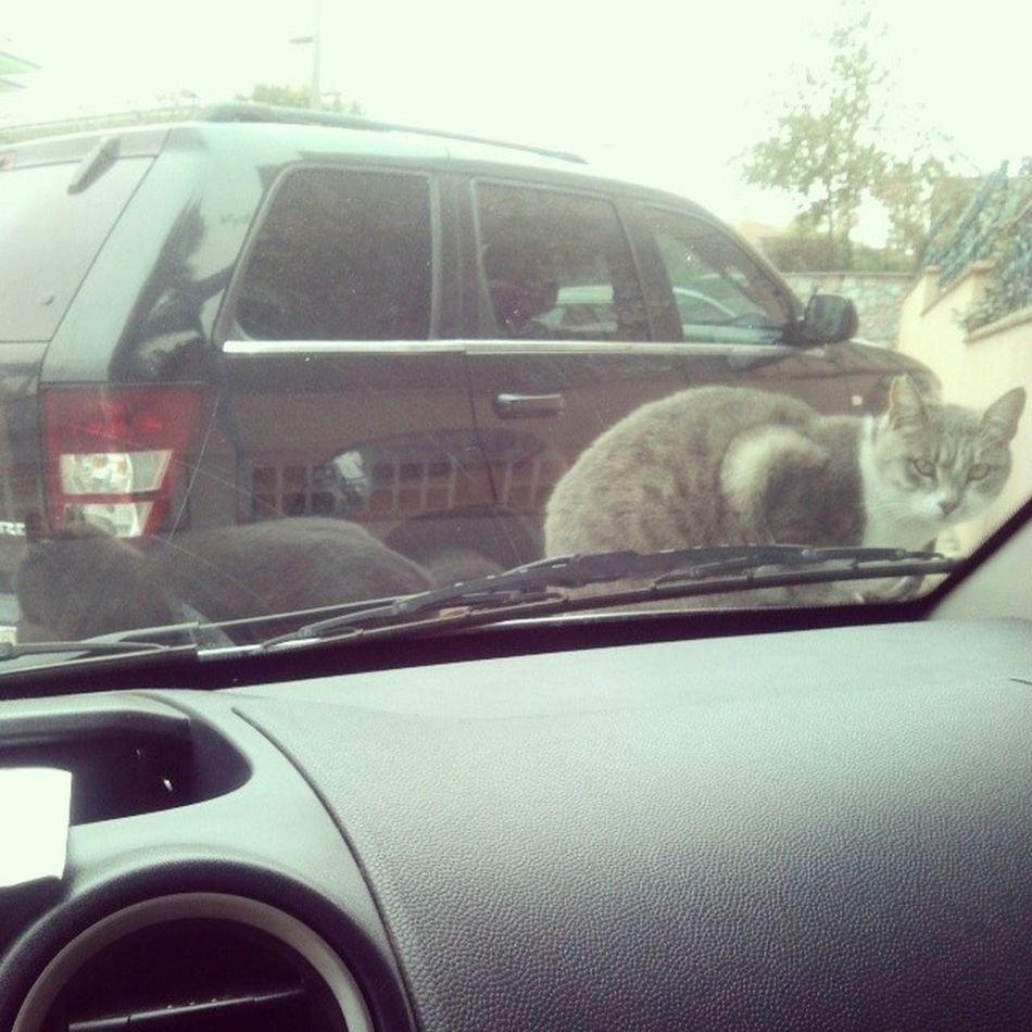 Cat gelen kaputa yatiyor. Dolmuş mu lan bu yuzsuzler yaa kaputu 4 leyelim beyler.. :))))