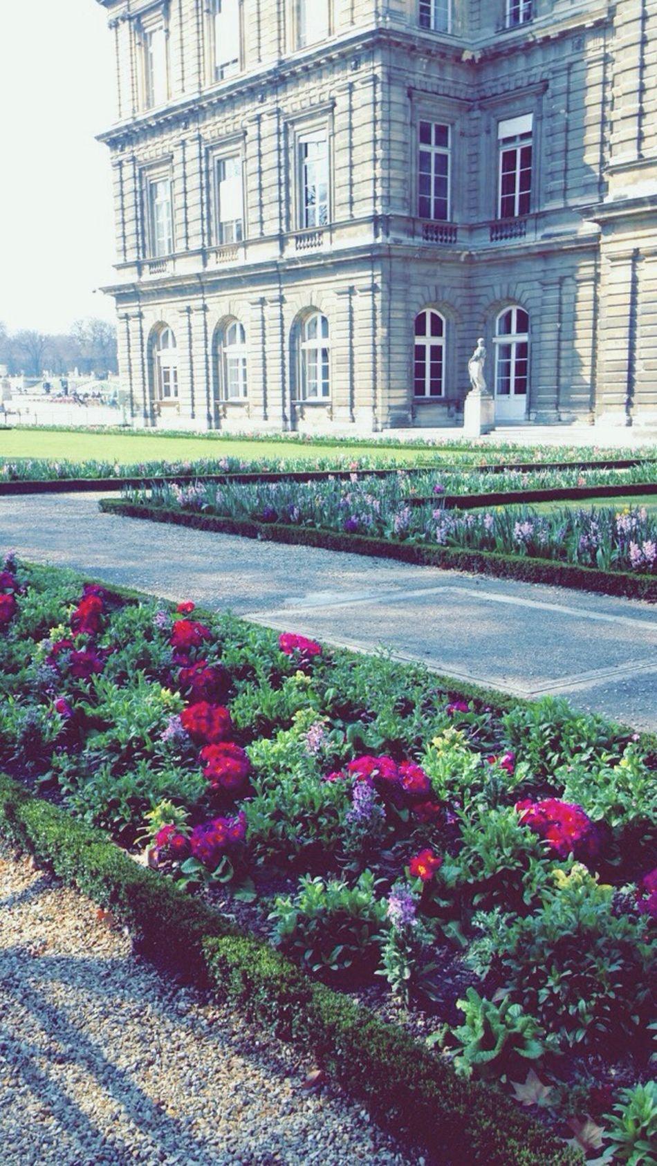 Jardin Du Luxembourg Sénat Paris Flowers Colorful Sun Vegetation