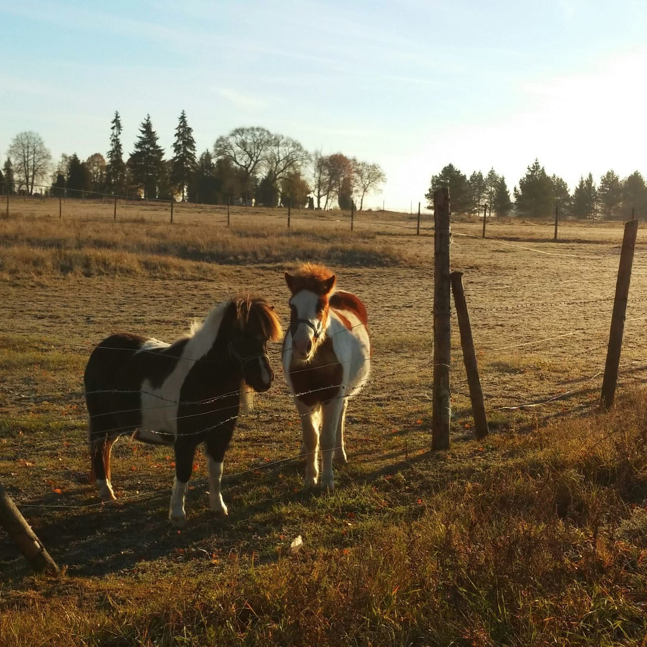 Beautiful stock photos of pony, Animal Themes, Clear Sky, Day, Domestic Animals