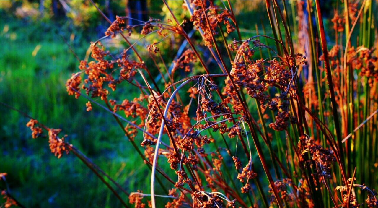 Şūr Chile Natural Beauty Notfilter Beautiful Nature Happy Time Simple Photography FirstEyeEmPic Atardecer Colores Daydreaming First Eyeem Photo Flowers RecorriendoChile
