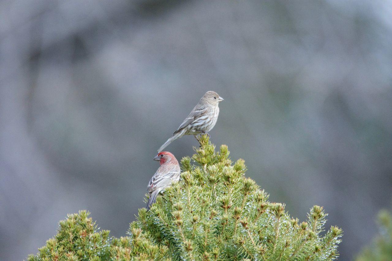 BIRDS PERCHING ON TREE