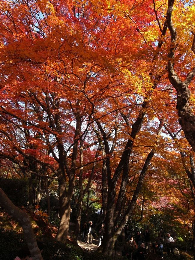 The Great Outdoors With Adobe Urban Spring Fever Japan Nature Orange Color Vacation Springlover