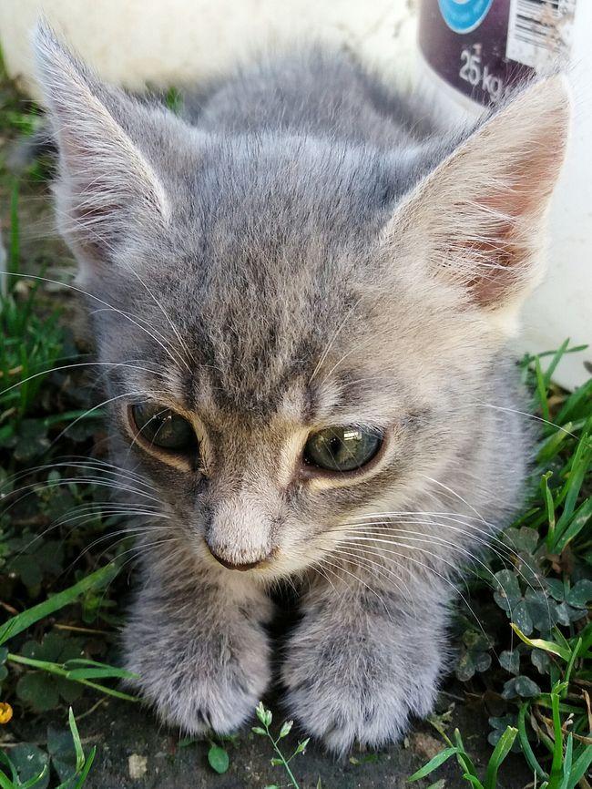 One Animal Cat Domestic Cat Domestic Animals Animal Themes Pets Kid Cat Samsungj5photography📱 Myphoto Photography MyPhotography Colorful