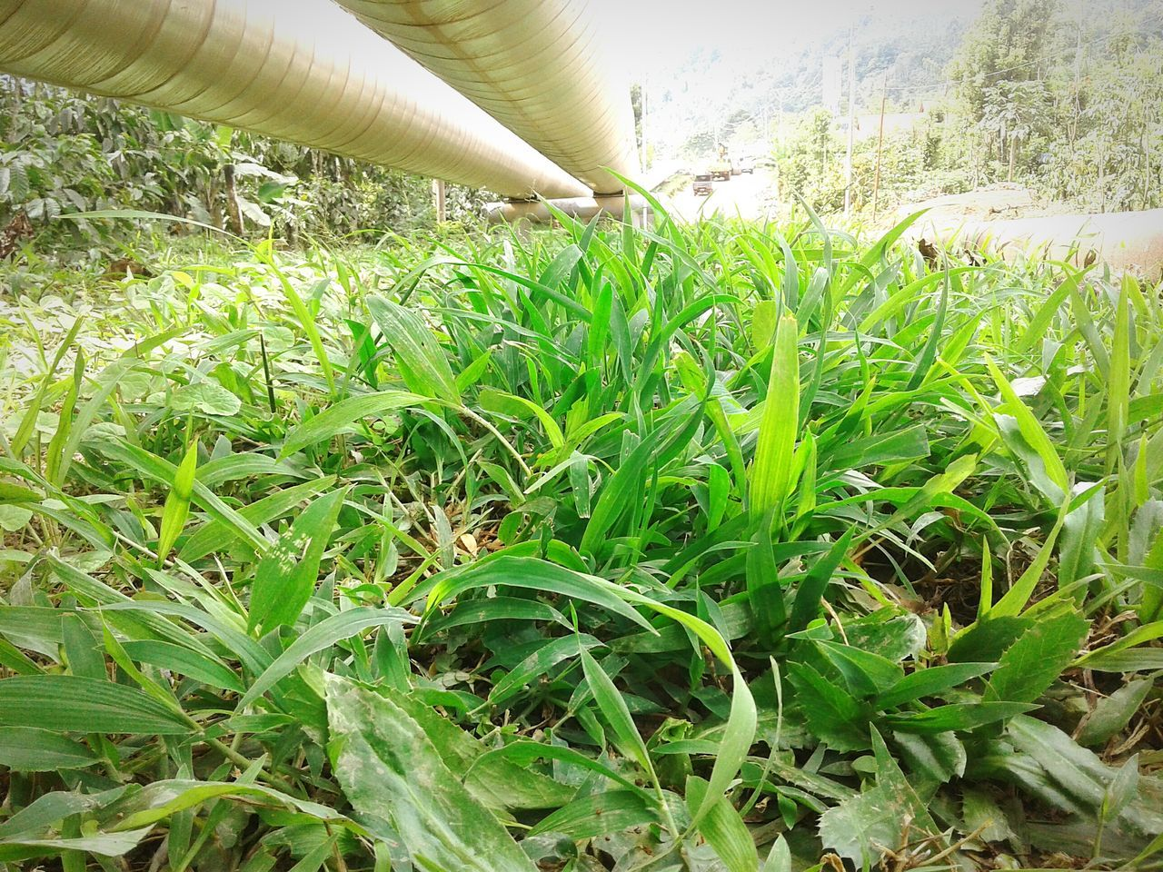 field, growth, green color, grass, day, nature, leaf, no people, agriculture, outdoors, close-up, beauty in nature