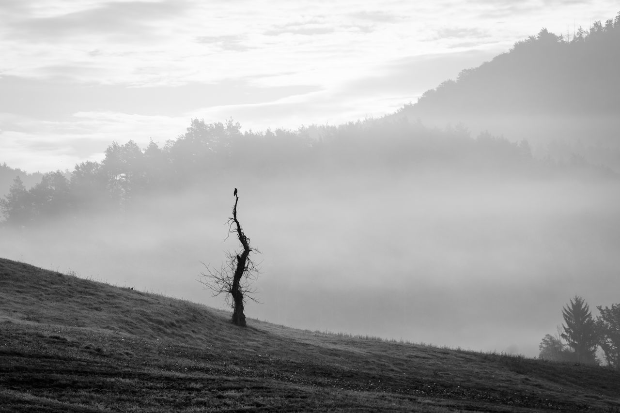 Raven Autumn Lost In The Landscape Bare Tree Beauty In Nature Blackandwhite Day Dead Tree Fog Hazy  Landscape Lone Mist Nature No People Outdoors Scenics Sky Tranquil Scene Tranquility Tree