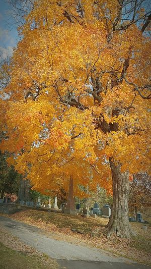 Tree Yellow Growth No People Outdoors Nature Sky Day Beauty In Nature autumn leaves