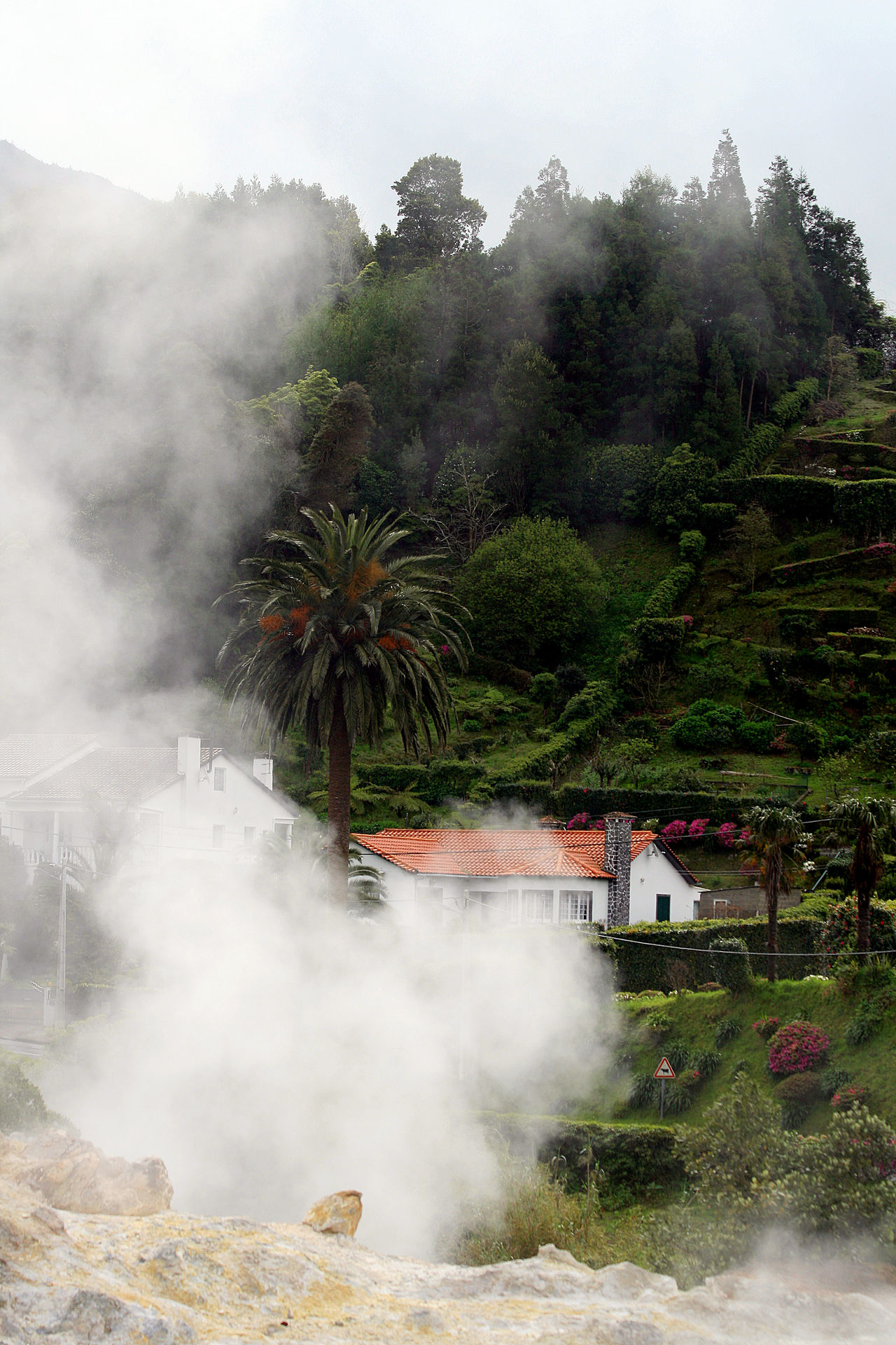 Azores Açores Beauty In Nature Environment Hot Spring Landscape Nature Outdoors Palm Tree Power In Nature Sao Miguel- Azores Scenics Smoke - Physical Structure Travel Tree