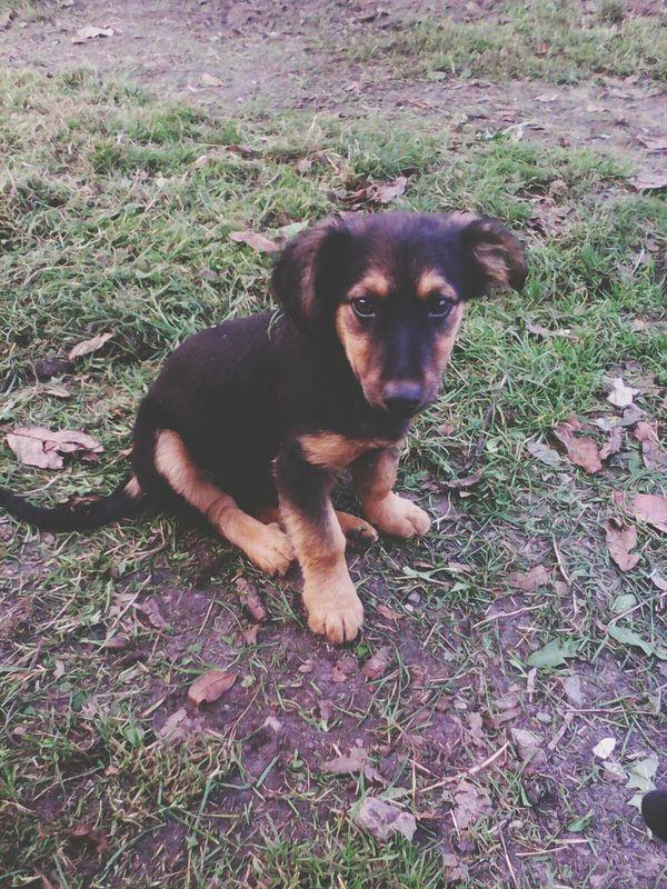Dog❤ A Small Dog Vilage