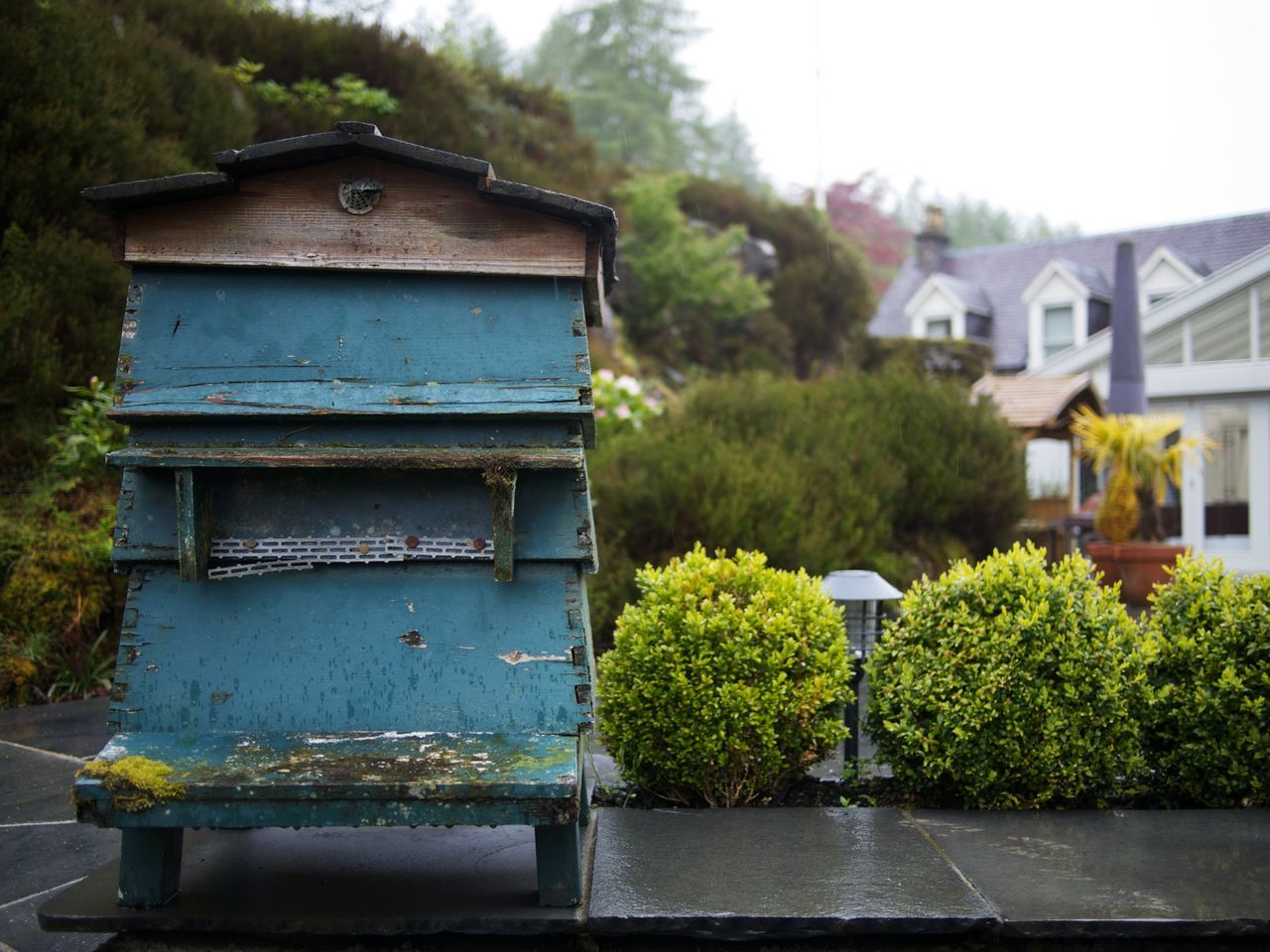 tree, no people, day, outdoors, built structure, architecture, beehive, public mailbox, building exterior, nature, growth, apiculture, close-up
