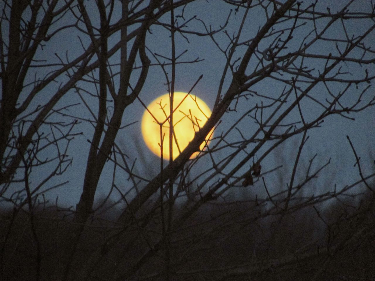 Moonset Morning Sky Moon Yellow Bare Tree Tree Branch Nature Sky Outdoors No People Moon Beauty In Nature Close-up