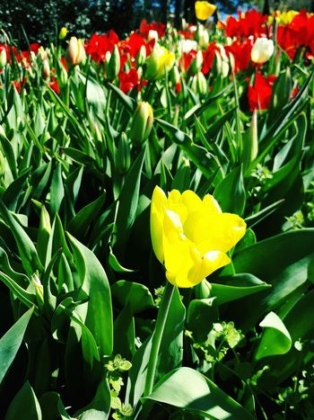 Flower Collection Flower Spring y Yellow Flower Red Flowers Green Bahr