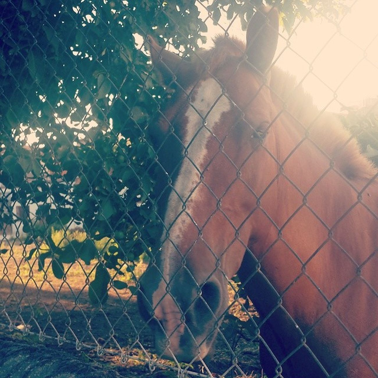 Pues aqui andamos con mi amigo el caballo <3 MissiMissi Caballo