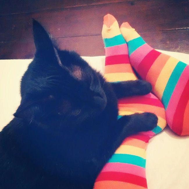Cores Cat Cats Love Amor Relaxing Foot Meia Gatos Felino