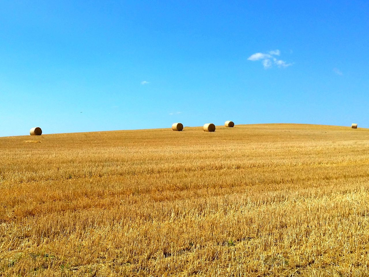 Agriculture Sky Field Rural Scene Day Cereal Plant Outdoors Nature Landscape Blue No People Clear Sky Combine Harvester Cornfield Cornfield And Sky Premium Premium Collection