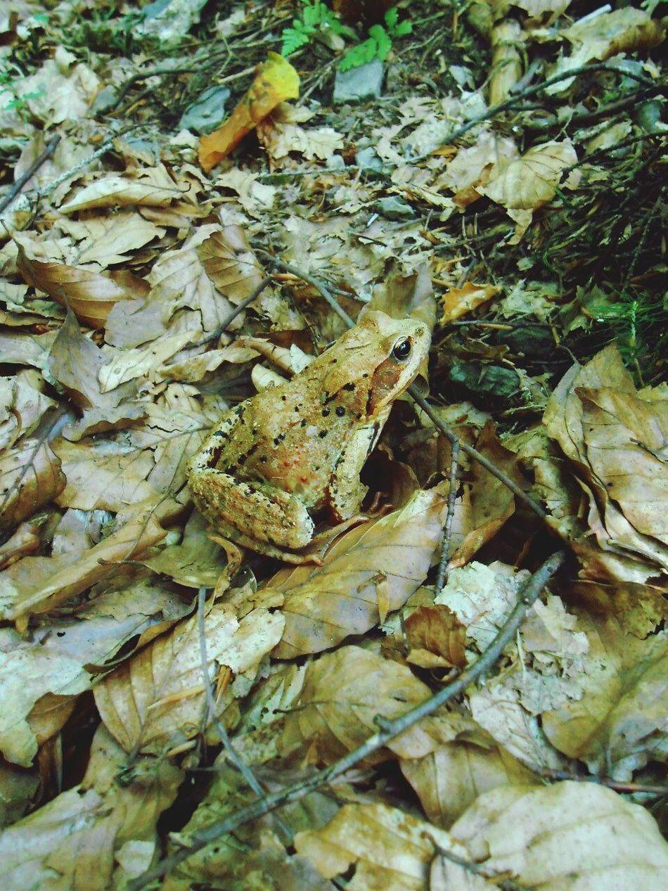 Frog Nature Photography Karpathian Mountain