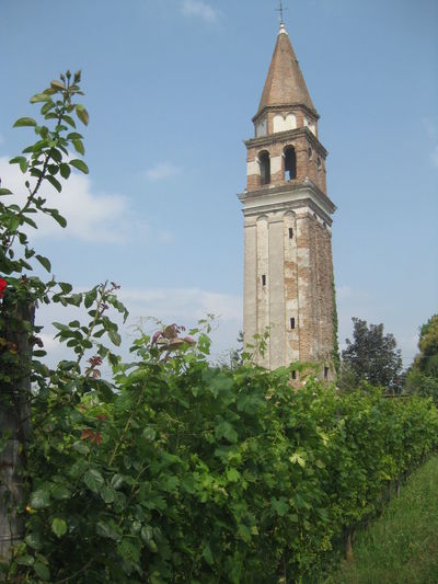 Venissa, the project. A vineyard in the Venice lagoon Bell Tower Day Garden Island No People Sunny Venice, Italy Venissa Vineyards
