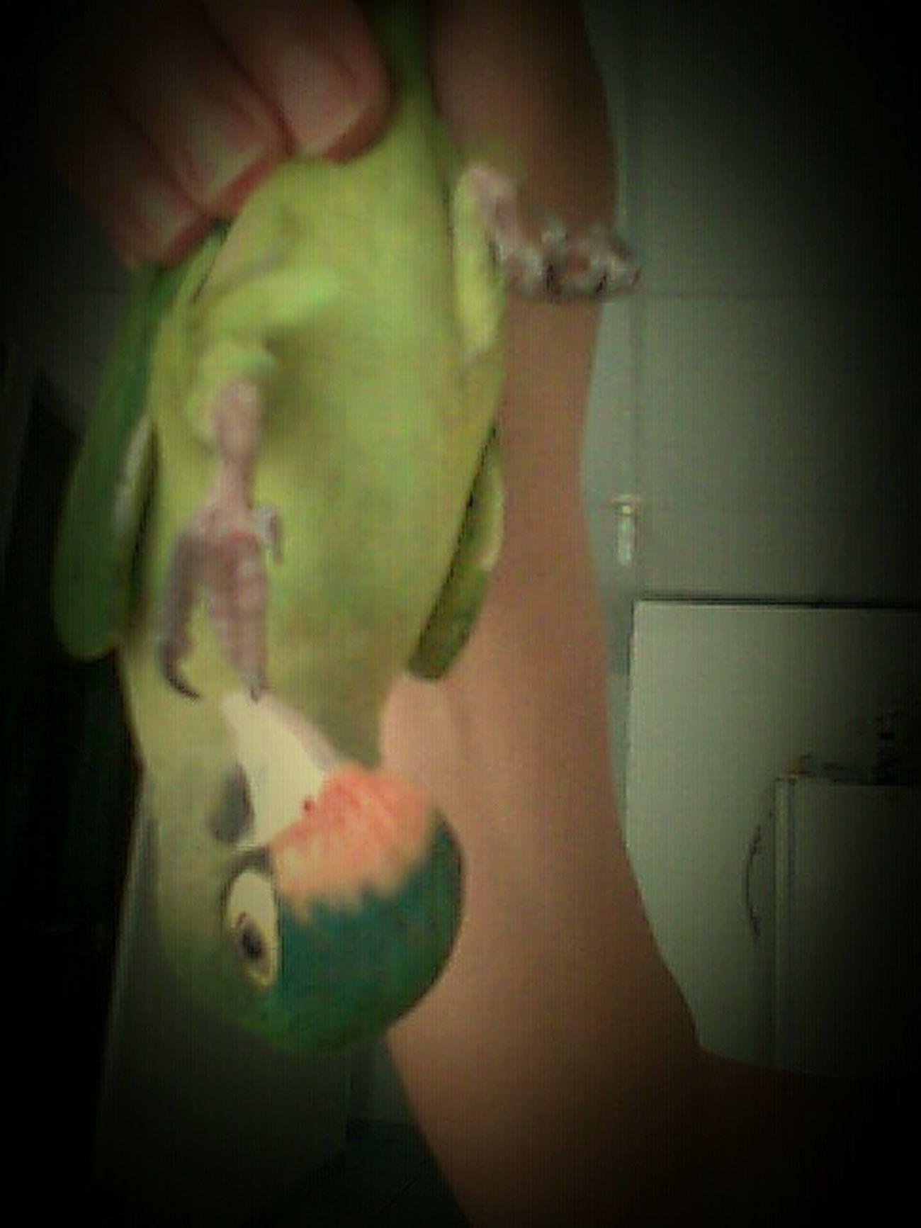 Pets My Crazy Parrot