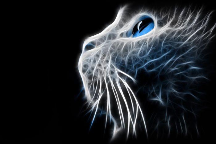 My Best Photo 2015 Cat Feline Blavk And White Blue Blue Eyes Photo Manipulation