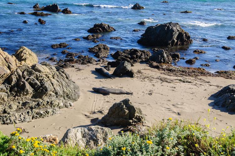 Animal Themes Animals In The Wild Beach California California Coast Central Coast, CA Day Horizontal Nature No People Outdoors Sand Sea Lion Sea Lions