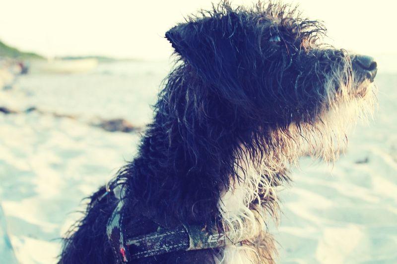 Alvin ❤ DogLove Dogs Dog