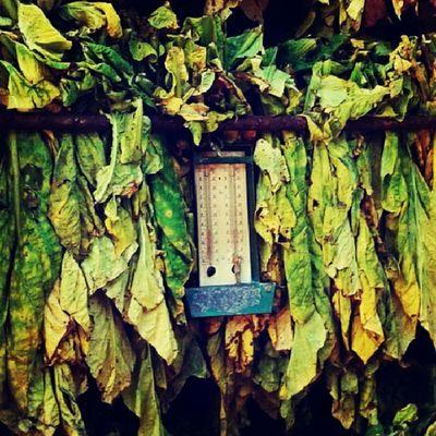 Tabaco Nature Healthy Health