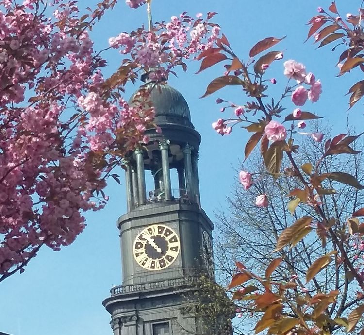Frühling 2017 Spring2017 May 2017 Nice Weather Flowers Beauty In Nature Blossoms  Cherry Blossoms Clock Tower Time Architecture Hamburgcityofdreams Hamburgcity Hamburgnaturepic Hamburgliebe Hamburgmeineperle Nature