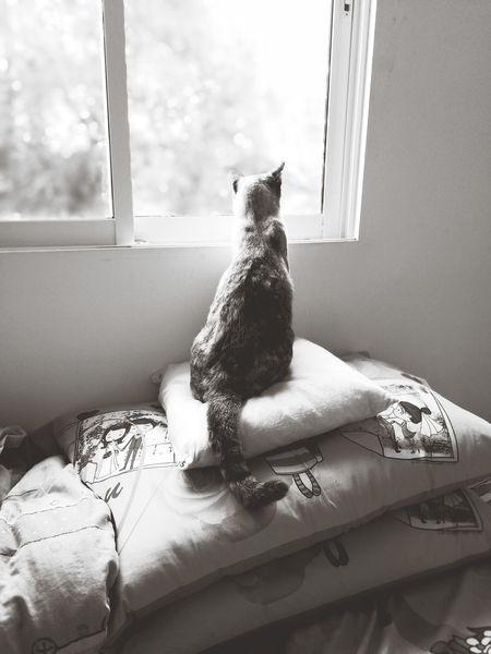 Cat Thailand :) Cat Window Sitting Indoors  Domestic Cat Animal Themes One Animal Pets