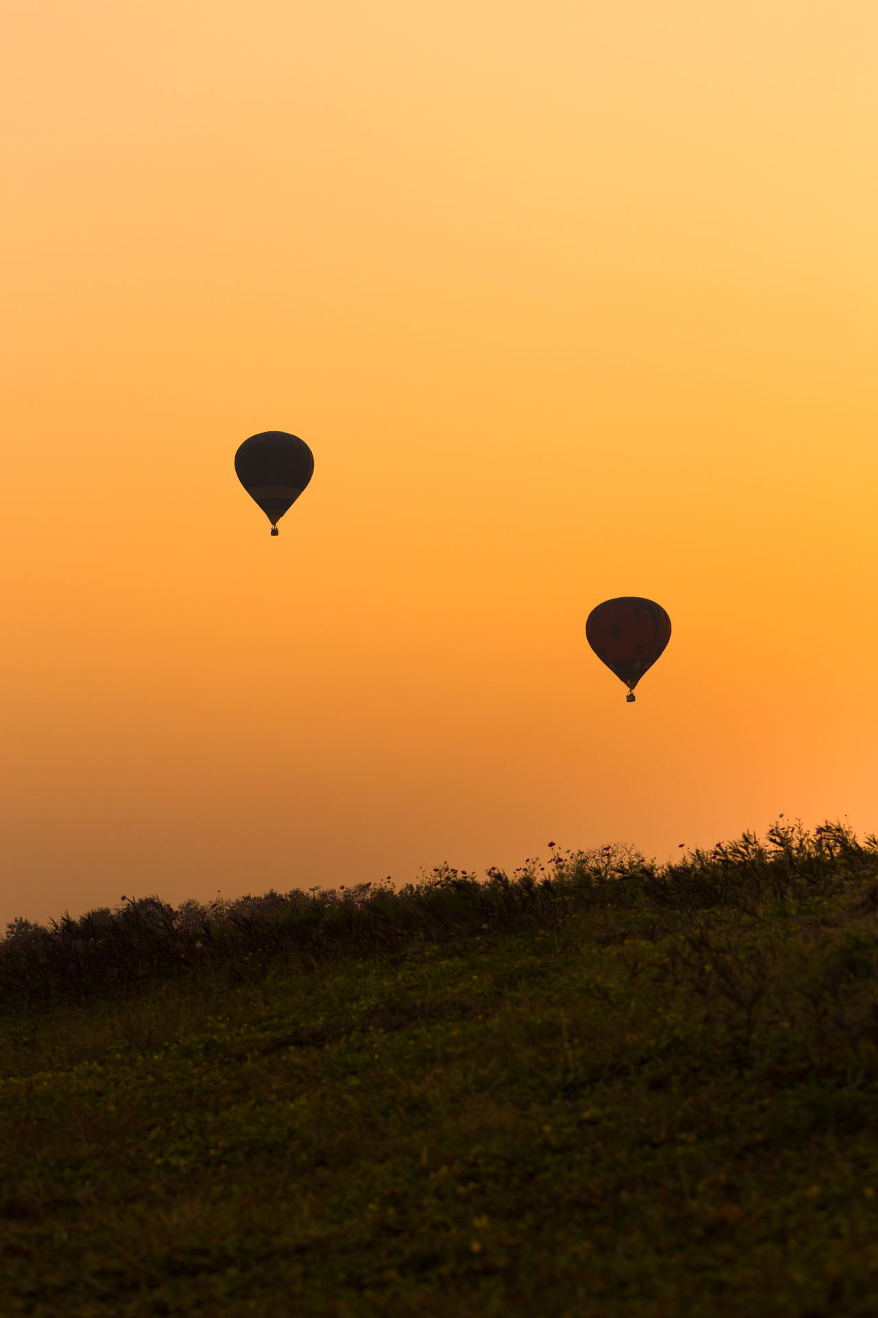 Balloons Extreme Sports Flying Hot Air Balloon Landscape Mid-air Orange Color Silhouette Sunset Transportation Silhouette_collection Sunset_collection EyeEm Gallery EyeEm Best Shots Highquality