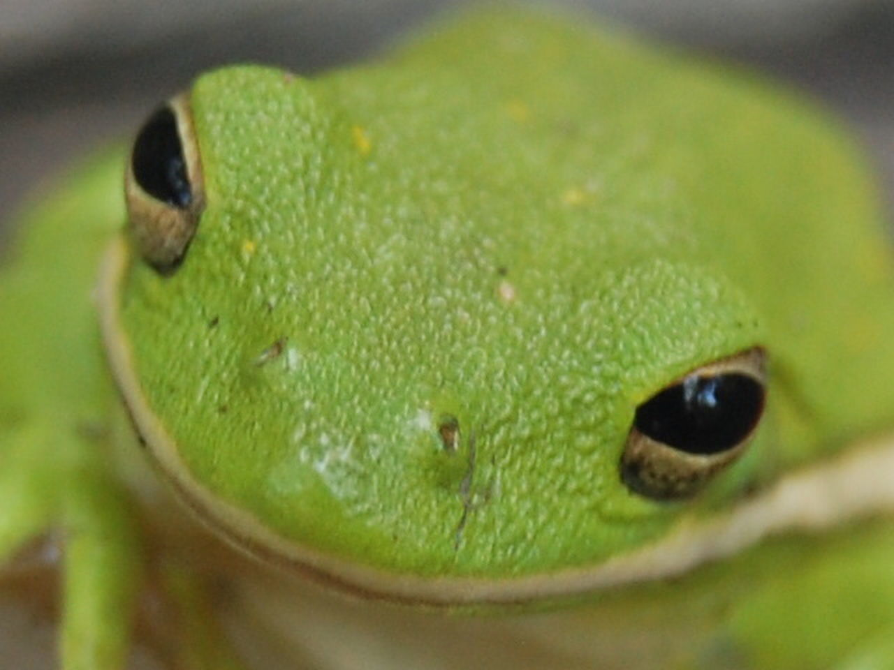 green color, close-up, one animal, animal wildlife, animal themes, no people, animals in the wild, day, nature, reptile, outdoors
