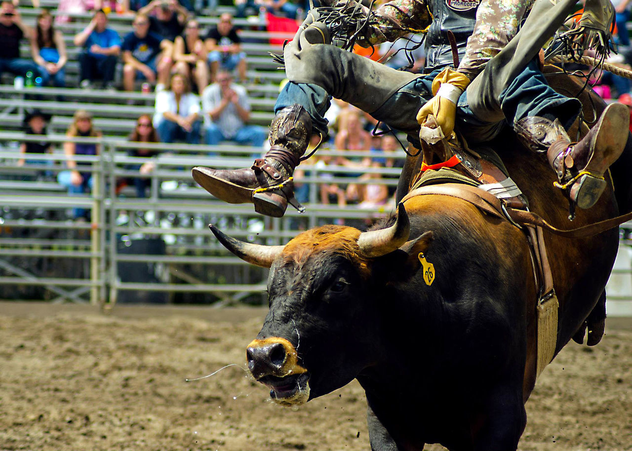 Americana Athlete bull Cowbull] 8 Seconds Cowboy Boots Wrangler Jeans Rodeo Scene cowCowboyyFocus On ForegrounddLivestockkMammallMennOccupationnOne AnimallOne PersonnOutdoorssReal PeopleeRoddRural SceneeSpectatorrSporttWestern ScripttEyeEmNewHeree