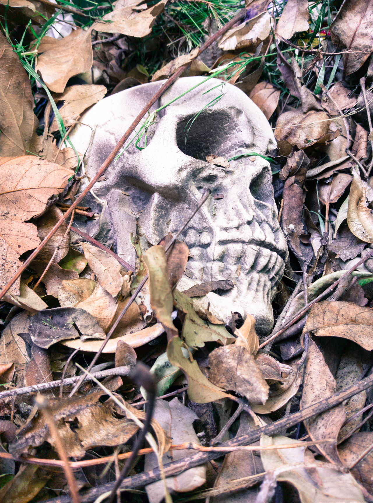 Outdoors No People Leaf Day Animal Themes Close-up Nature Skull Halloween Props Decoration